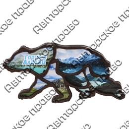 Магнит контурный Медведь вид 1 с символикой Горного Алтая