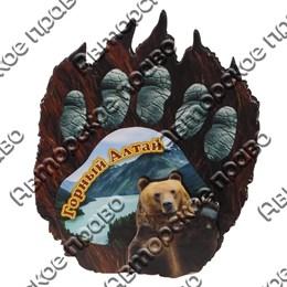 Магнит Лапа медведя вид 3 с видами Горного Алтая