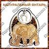 Магнит с янтарем Слон вид 1 - фото 55656
